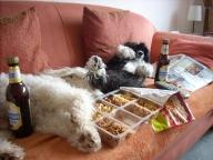 Wenn Hunde allein sind! - Fun